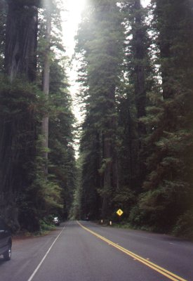 Crescent City Ca And Redwood National Park